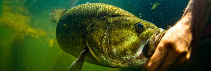 Bass Fishing 101: All Of Your Questions Answered In One Place