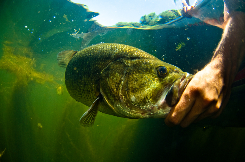 Everything You Ever Wanted to Know About Bass Fishing but Were Too Afraid to Ask