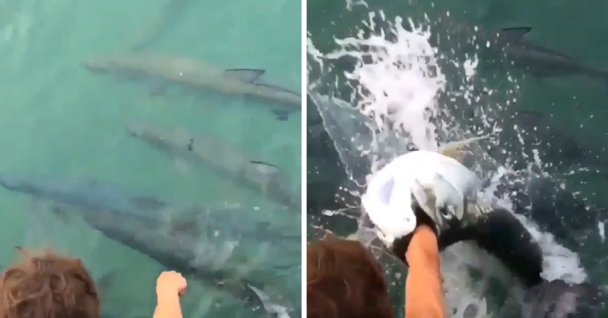 tarpon eats mans arm