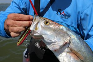Inshore Topwater Fish Catch