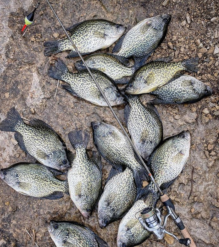 Crappie Fishing Spawn