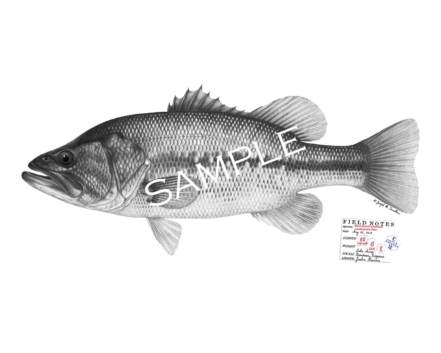 """Personalized Fish Prints - up to 30"""""""